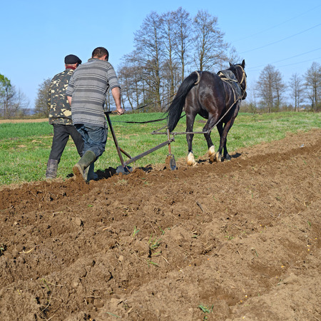 livestock sector: Fallowing of a spring field by a manual plow on horsedrawn Stock Photo