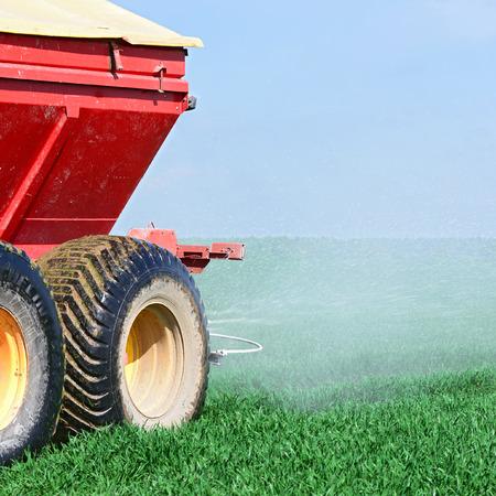 barley head: Adding fertilizer in the grain field Stock Photo