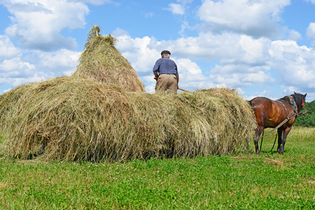 steeplechaser: Transportation of hay by a cart