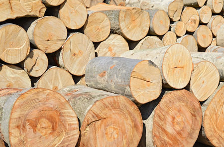 forest products: Blocks from a beech.
