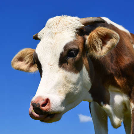 offshoot: Head of the calf against the sky Stock Photo