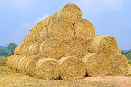 stockpiling: Bales of straw on the ground storage
