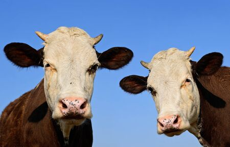 offshoot: Heads of calfs against the sky