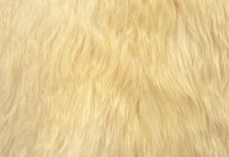 sheep skin: The manufactured skin of a sheep.