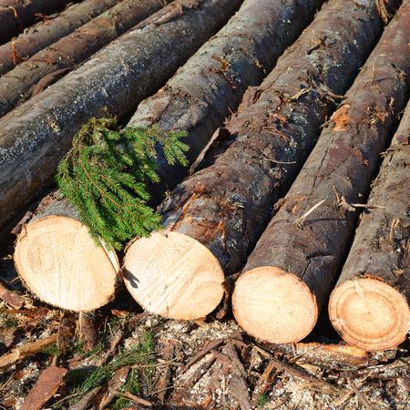 basic material: Wood preparation