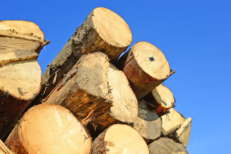 lumbering: Wood preparation