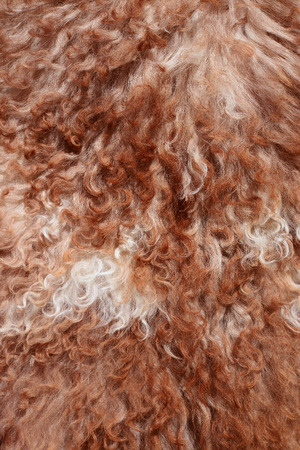 bevy: The manufactured skin of a sheep