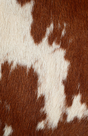 cow skin: Fragment of a skin of a cow Stock Photo