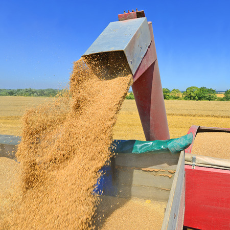 overloading: Overloading grain silo with a tractor in a car