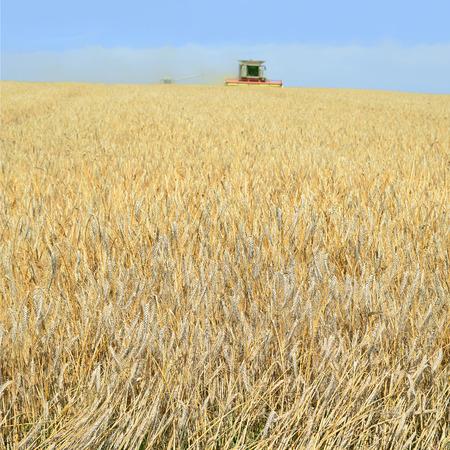 agricultural tenure: Grain harvesting combine
