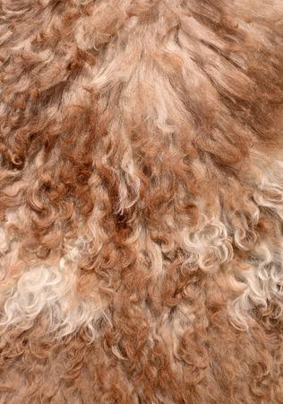 sheep skin: The manufactured skin of a sheep