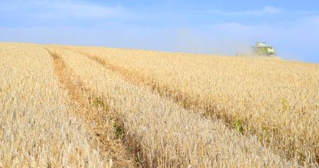 farm implement: Grain harvesting combine