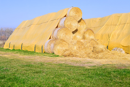 stockpiling: Bales of straw on the ground storage under the tent