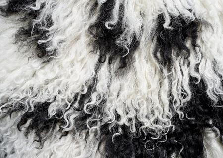sheep skin: Skin of a sheep Stock Photo
