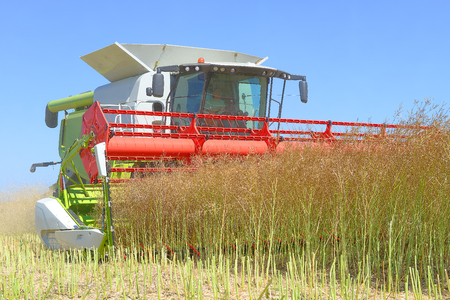 agricultural tenure: Rapeseed combine