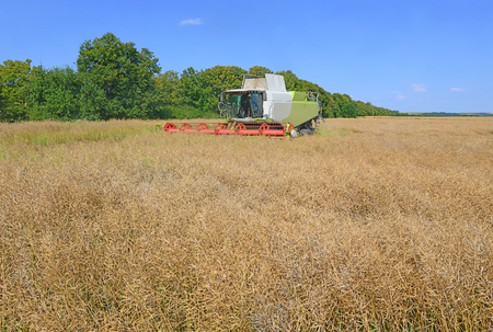 farm implement: Rapeseed combine