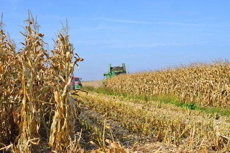hauling tractor: At harvest corn.