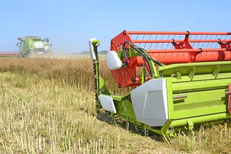 yielding: Modern combine harvesting of rape
