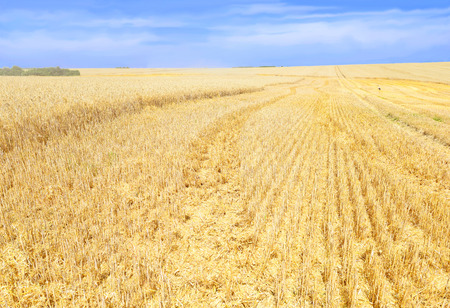 rural economy: Grain field