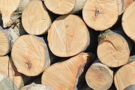 primary product: Wood preparation