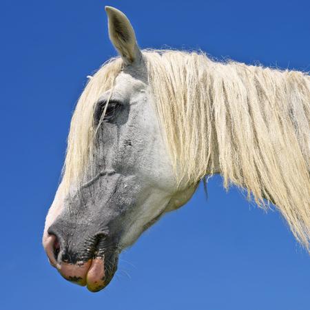 cabeza caballo: Cabeza de un caballo en el cielo
