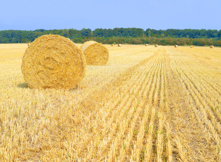 rural economy: Harvesting of straw