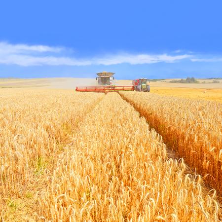 wheeled tractor: Grain harvesting combine