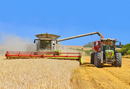 Overloading grain harvester into the grain tank of the tractor trailer. Stock Photo