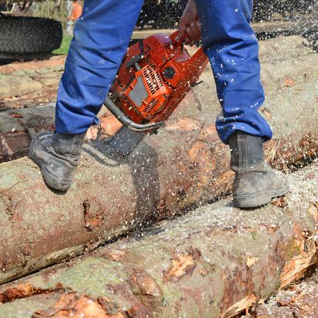 Scrap of a log a saw
