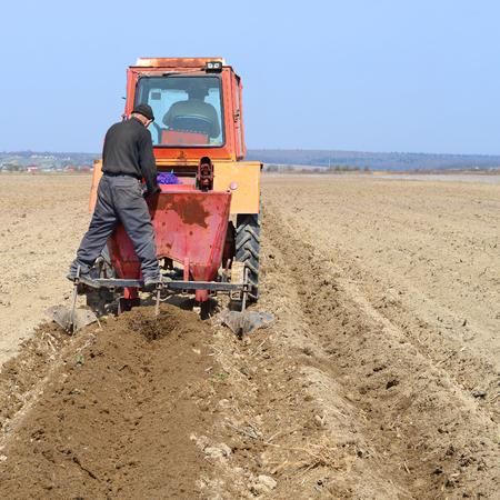 在种植土豆