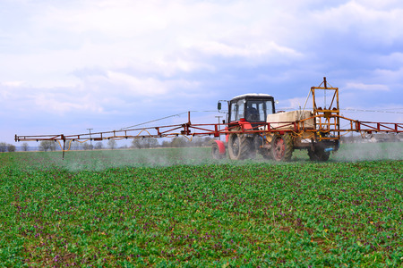 Adding  chemical weed and pest killers on a spring field with the plantlet of rape Stock Photo
