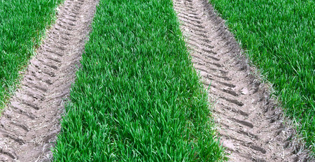unsurfaced road: Technological road on a spring field with the young shoots of cereals. Stock Photo