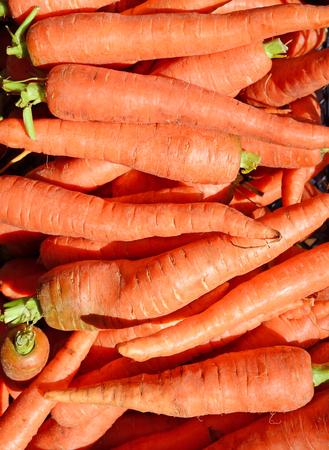 rural economy: Carrot, early vegetables Stock Photo