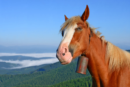 livestock sector: Horse on a summer pasture in the Carpathian Mountains. Ukraine