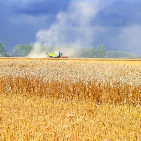 Overloading grain harvester into the grain tank of the tractor trailer. Stock Photo
