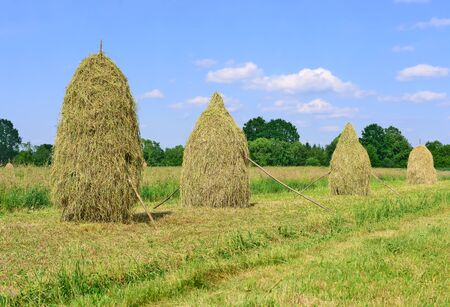 Hay in stacks Stock Photo