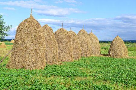 Hay in stacks. Stock Photo