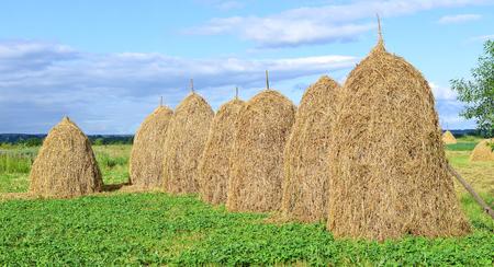 hayrick: Hay in stacks. Stock Photo