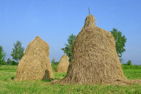 hayrick: Hay in stacks in a summer rural landscape