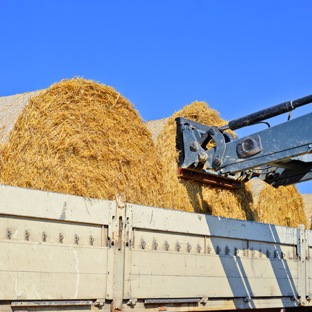 agricultural application tractor: Loading bales of straw in the car tractor with attachments