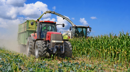 Harvesting of corn silage in the field Stockfoto