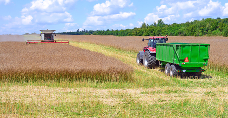 agricultural application tractor: Harvesting rape in field
