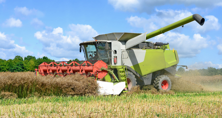 agricultural tenure: Modern combine harvesting rape field Stock Photo
