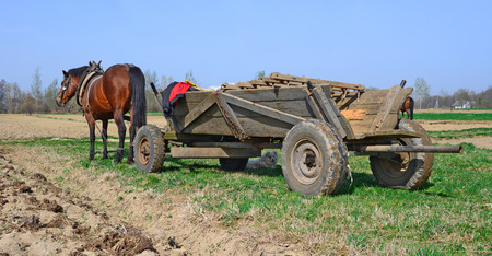 livestock sector: Horse with a cart on a spring field