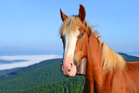 Horse on a summer pasture in the Carpathian Mountains. Ukraine