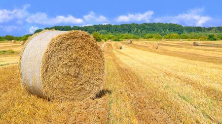 Harvesting of straw in the rural landscape Stock Photo