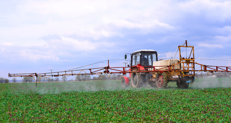 tenure: Adding  chemical weed and pest killers on a spring field with the plantlet of rape Stock Photo