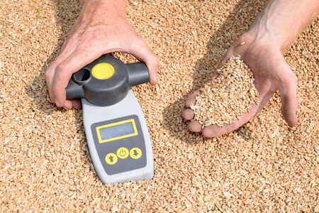 moistness: Determination of moisture content of grain yield in field conditions Stock Photo