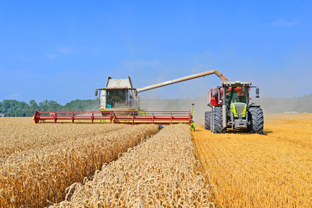 agricultural application tractor: Overloading grain harvester in tractor trailer tank in the field