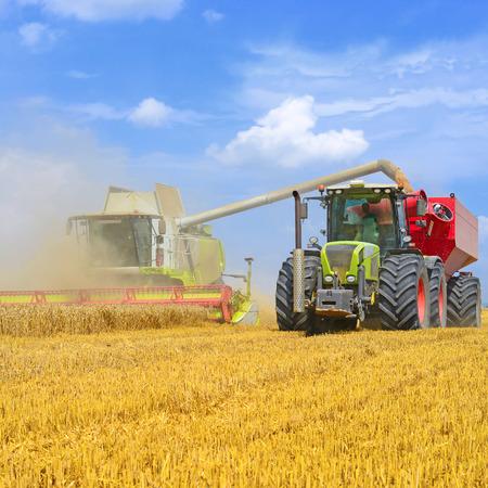 : Overloading grain harvester in tractor trailer tank in the field Stock Photo